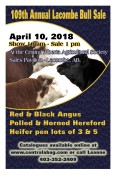 109th Annual Lacombe Bull Sale