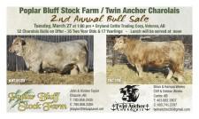 Poplar Bluff Stock Farm / Twin Anchor Charolais 2nd Annual Bull Sale