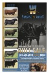 PROGENY FROM ELITE SIRES WILL SELL!