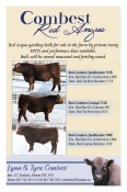 Red Angus yearling bulls for sale