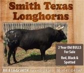 Smith Texas Longhorns 2 year old bulls for sale