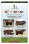 RED ANGUS BULLS FOR SALE PRIVATE TREATY