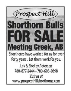 Shorthorn Bulls For Sale  Meeting Creek, Ab